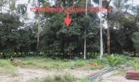 บ้านเดี่ยวหลุดจำนอง ธ.ธนาคารกสิกรไทย นครศรีธรรมราช นบพิตำ นาเหรง